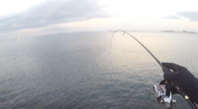真冬は魚は釣れるのか!?検証してきた!