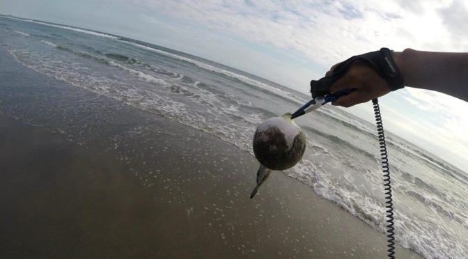 粘りに粘って完全勝利!初めてでも釣れる遠州灘サーフのヒラメ釣り