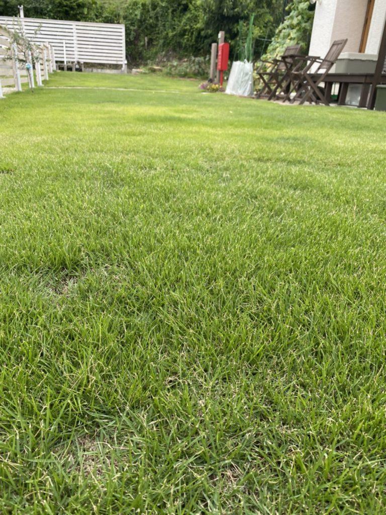 芝生に生えた雑草には専用の除草剤が効く!